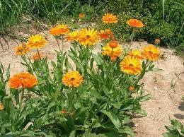 echizos de amor con flores