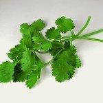 Hechizos de amor con romero y cilantro